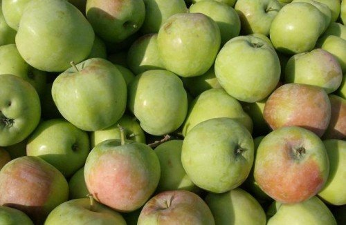 Плоды Синапа