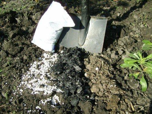 Подготовка почвы для посадки саженца