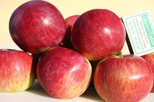 Собранные яблоки Орловское полосатое