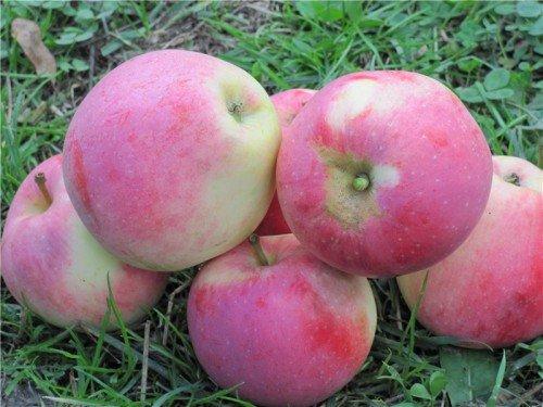 Яблоки Орловское строевское
