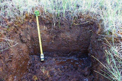 Торфяная почва с грунтовыми водами