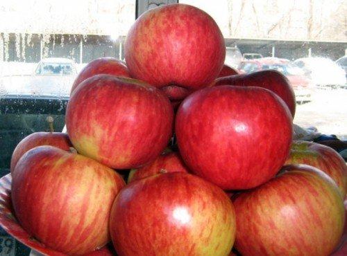 урожай яблокАпорт