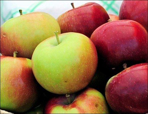 Урожай яблок Спартан