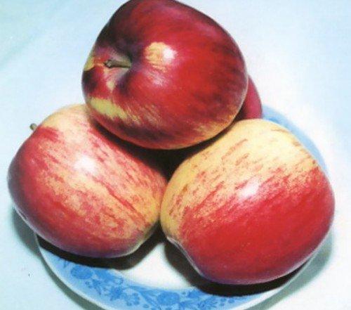 Яблоки Орловское полосатое