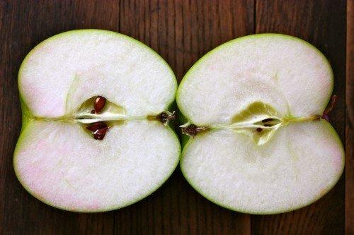 Яблоко сорта Богатырь в разрезе