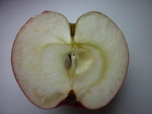 Яблоко сорта Звёздочка в разрезе