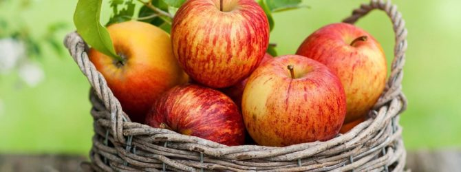 фото яблоня орловское полосатое описание фото