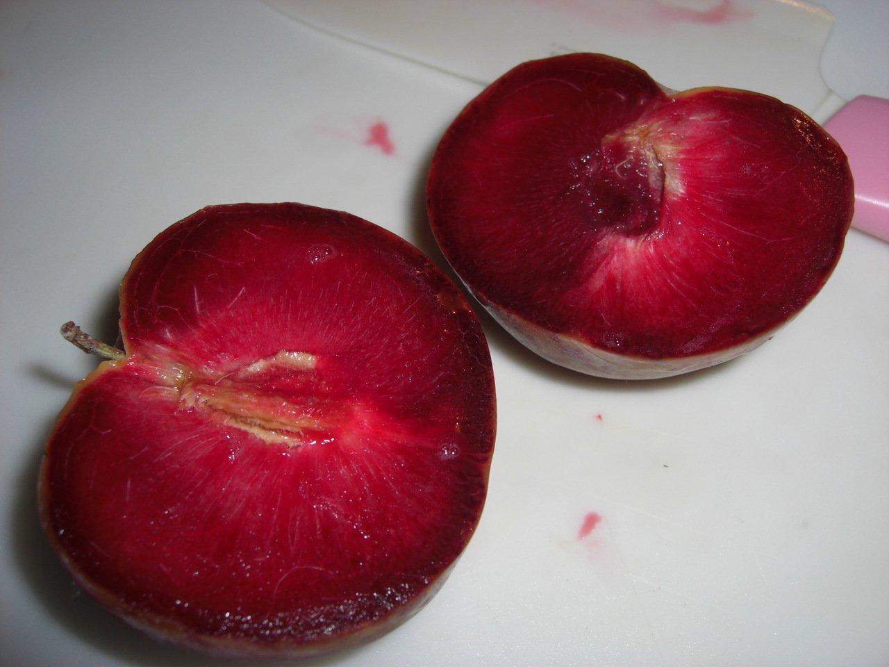 абрикосослив абрикос