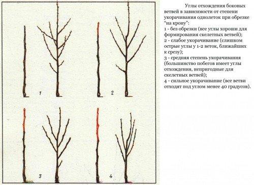 схема укорачивания однолетних растений