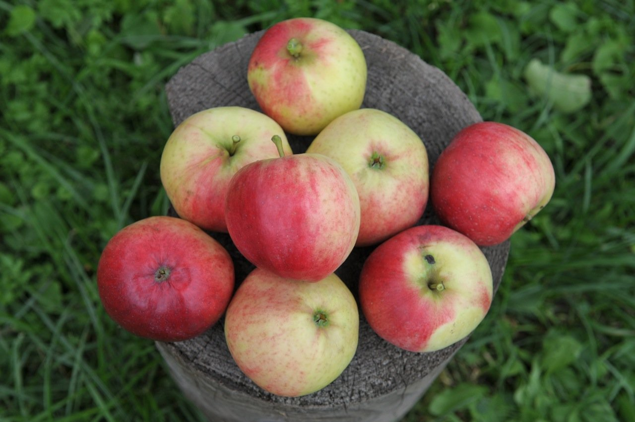 яблоня орловим опылители