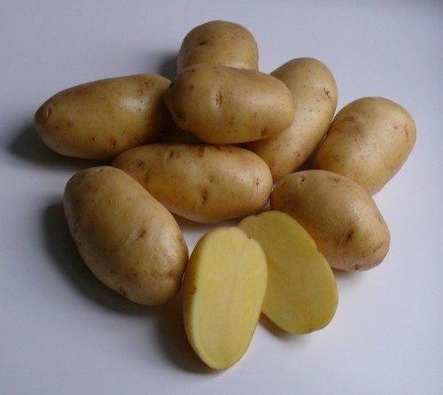 Селекционный сорт картофеля Гала