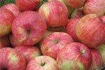 плоды Бельфлер