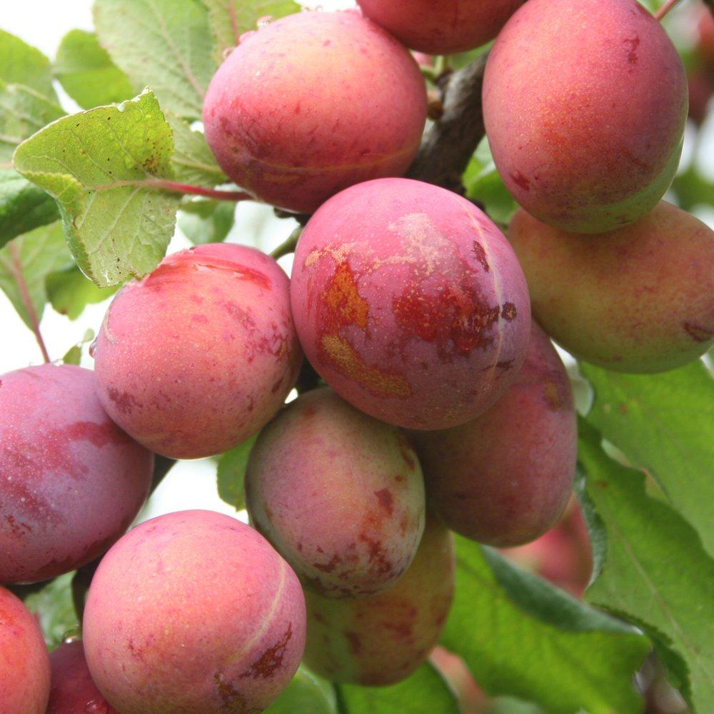 Пряные травы и специи Выращивание и использование в