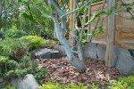 Мульча вокруг дерева