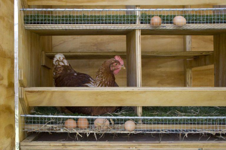 Хитрые гнезда для кур несушек своими руками