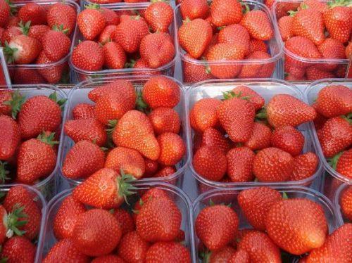 Контейнеры с ягодами садовой земляники