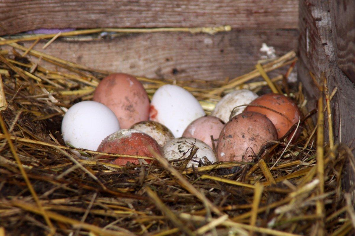 Пасха, праздник, весна, религиозный, символ, еда, пасхальное, куриное, яйцо, фон