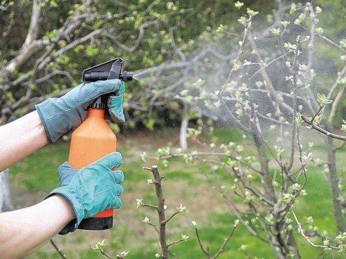 Обработка дерева от вредителей и заболеваний