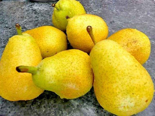 Плоды груши Лада
