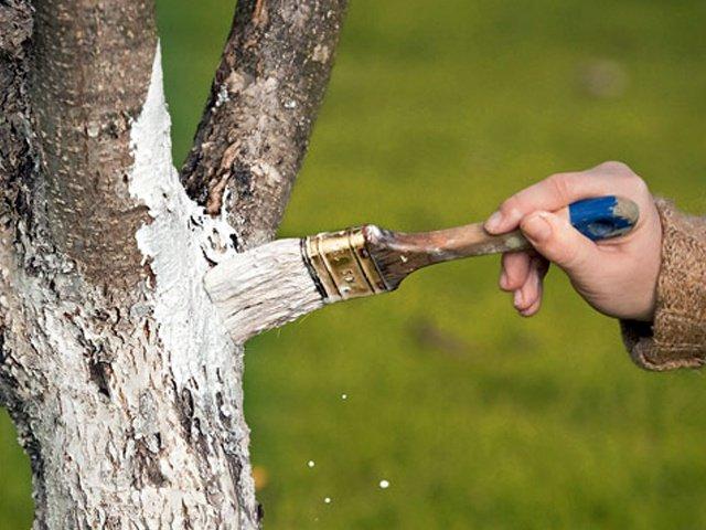 Смазка для ран садовых деревьев