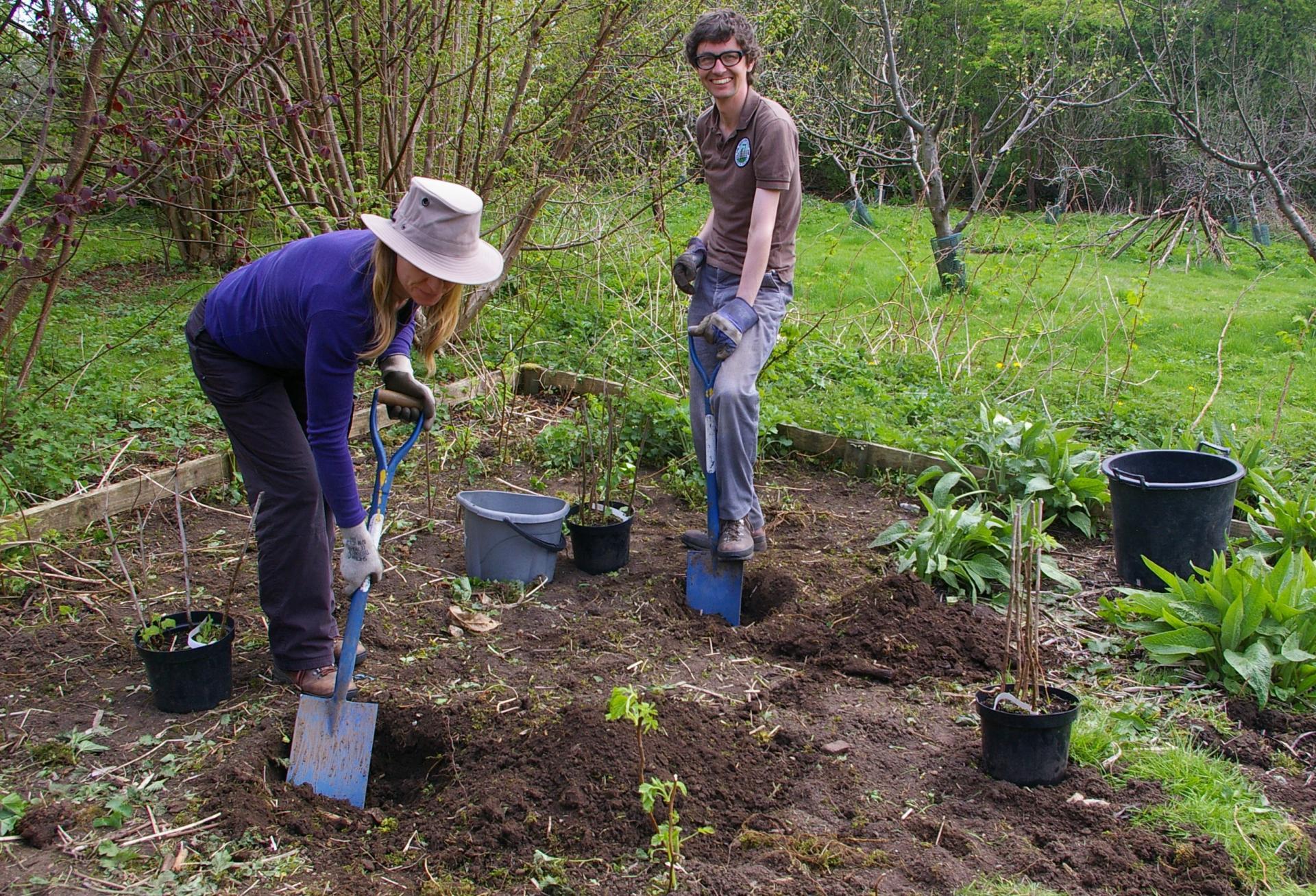 Как правильно посадить деревья в саду В саду (Огород. ru)