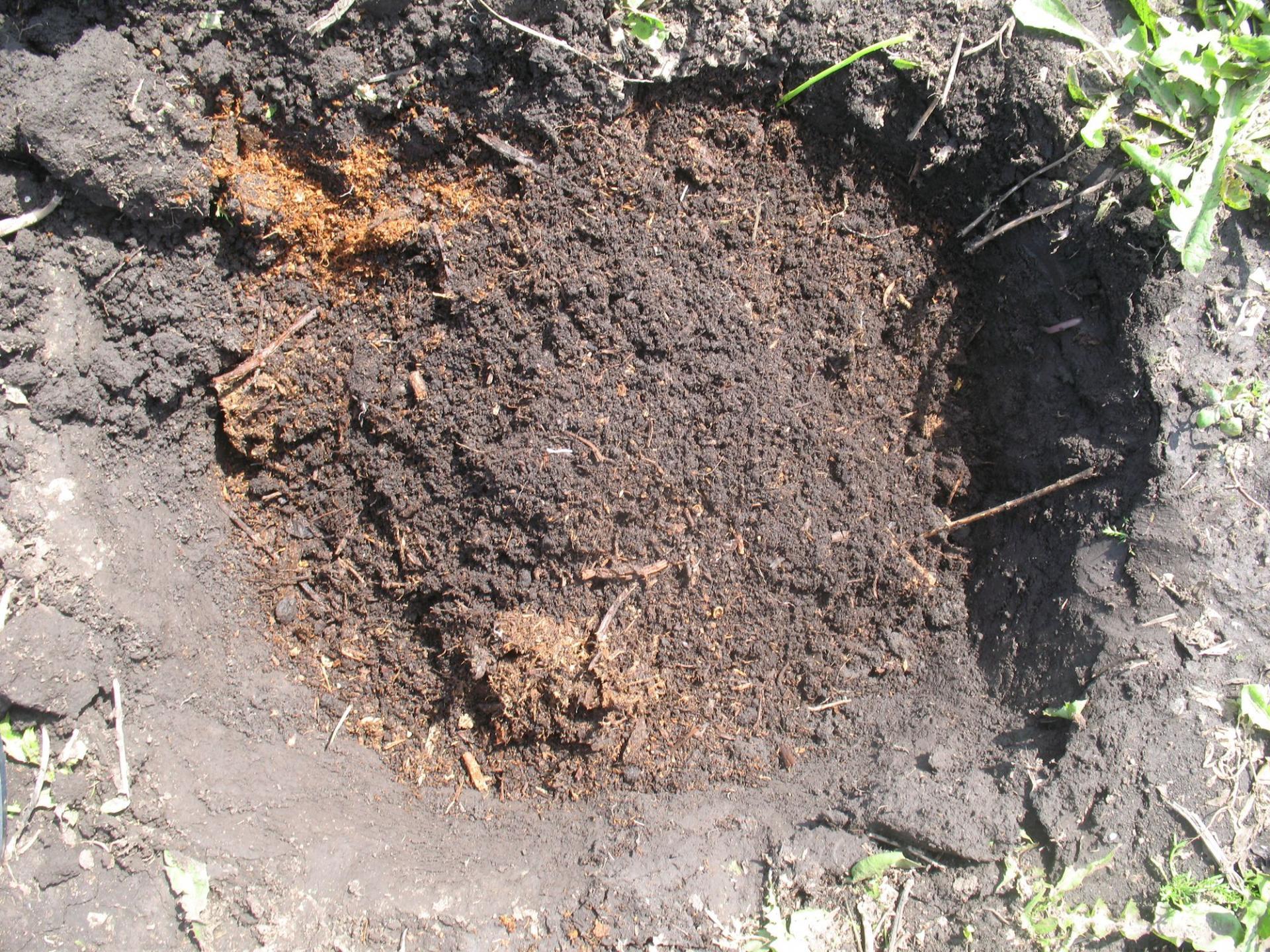 Бальзамин садовый посадка и уход Выращивание из семян в 66