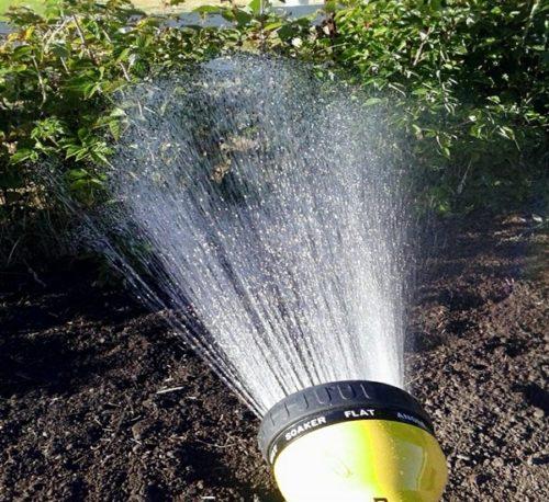 Распыление воды на кусты малины