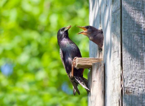 две птицы в скворечнике