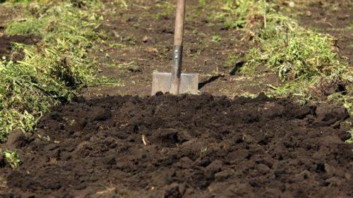 Выбор места и подготовка почвы к посадке земляники