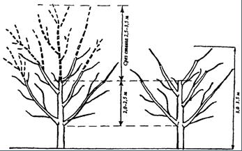 Схема снижения кроны