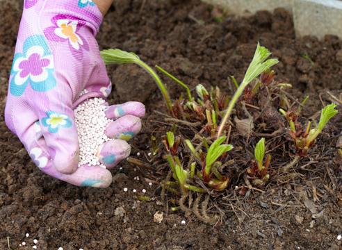 Удобрения для земляники
