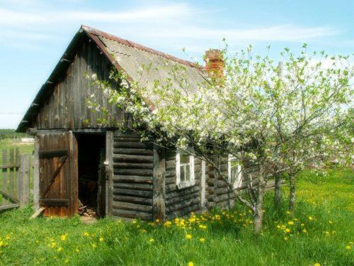 Выбор места для посадки вишни