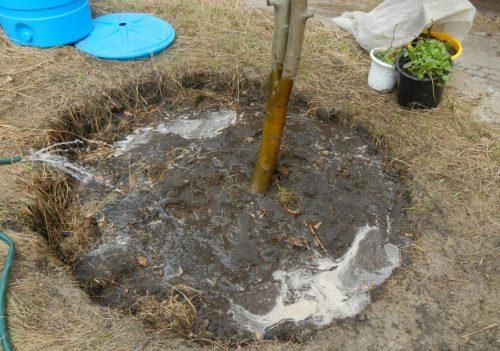 Вода вокруг ствола дерева