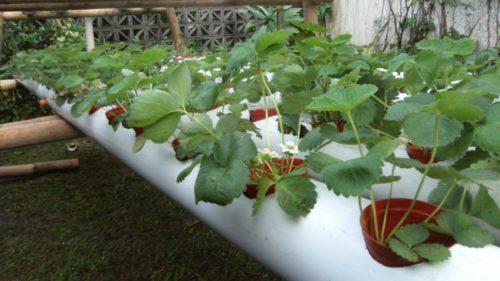 Выращивание в контейнере