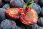 Личинка плодожёрки