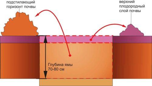Схема подготовки ямы для посадки груши