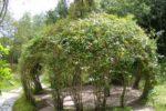 Лёгкая беседка из растений