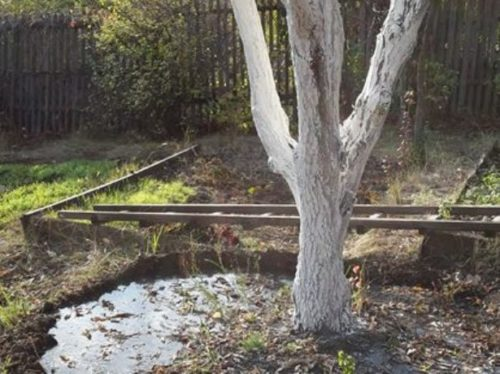 Политое дерево
