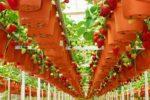 Выращиваение в теплице