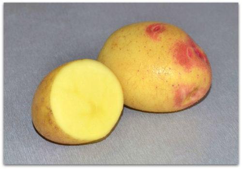 Картофель Лимонка в разрезе