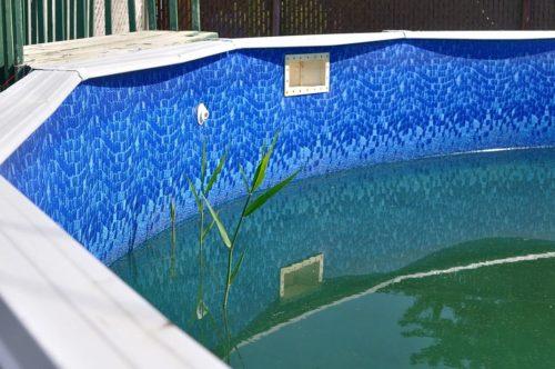 Цветение воды в бассейне