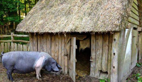 Деревянный свинарник