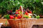 Полученный в вегетарии урожай