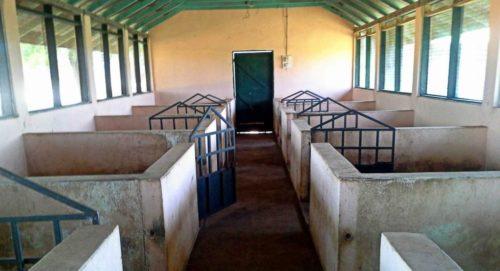 Расположение станков в свинарнике
