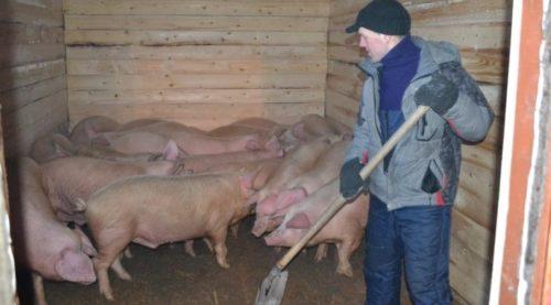 Уборка свинарника