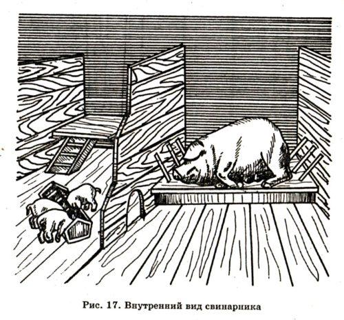 Устройство свинарника