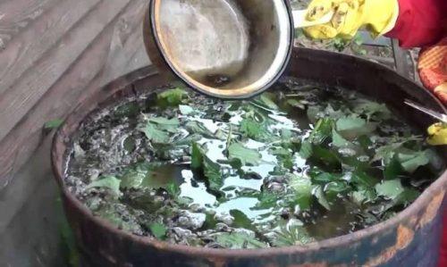 «Зелёное» удобрение