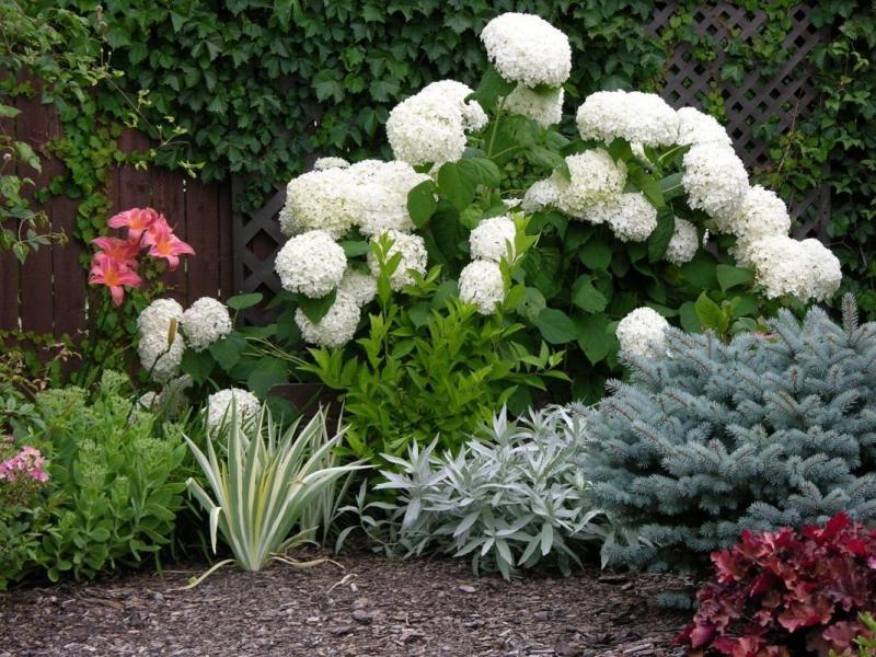 Осенняя подкормка садовой гортензии помогаем цветку подготовиться к зиме