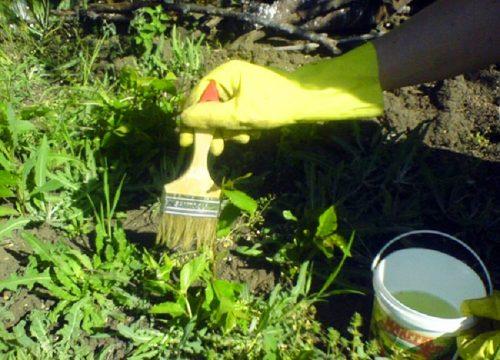 Обработка сорняка гербицидом