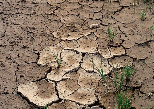 Истощённая почва